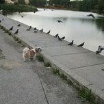 Photo taken at Lac de Lognes by Chloé N. on 8/30/2012