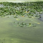 Photo taken at Normandale Lake Park by Keith F. on 8/30/2014