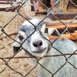 Photo taken at CJ Goat Farm by Desiree G. on 1/17/2013