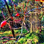 Photo taken at The Gardens   Decatur Island, San Juan Archipelago, Wa by Tim G. on 1/1/2015