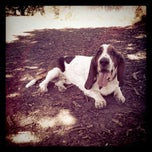 Photo taken at Columbia Dog Park by MaryElyse H. on 9/28/2011