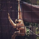 Photo taken at Great Ape House at the National Zoo by Dustin C. on 6/23/2012