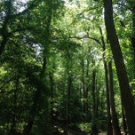 Photo taken at Congaree National Park by nikhil t. on 4/30/2012