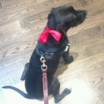 Photo taken at The Dog Shop by Anna J. on 3/12/2012
