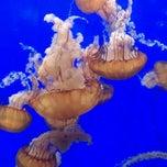 Photo taken at Oregon Coast Aquarium by Misty D. on 10/2/2011