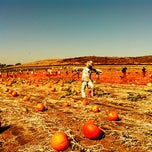 Photo taken at Tanaka Farms by Brian W. on 10/15/2011