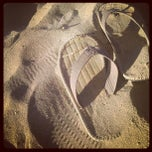 Photo taken at Bagno Bologna by Francesco A. on 8/18/2012