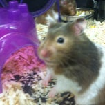 Photo taken at PetSmart by King E. on 8/2/2012