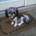 Photo taken at Pet supplies plus Grooming Salon by 🍀Phillip G. on 2/22/2012