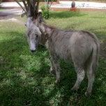Photo taken at Kichanga Lodge Donkey Sanctuary by Silvia N. on 8/19/2012