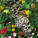 Photo taken at Botanical Conservatory by Bex on 6/17/2012