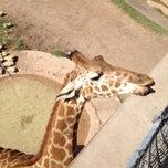 Photo taken at Abilene Zoo by Bradley H. on 4/6/2012