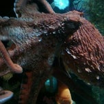 Photo taken at Shaw Ocean Discovery Center by Joe H. on 2/27/2012