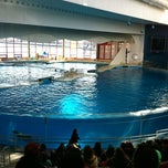 Photo taken at Dolphin Show by Joe W. on 3/10/2012