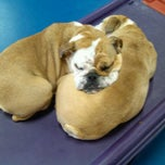 Photo taken at Urban Pooch Canine Life Center by Ryan B. on 4/1/2012