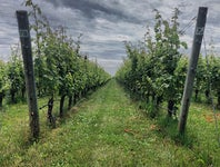 Cover Photo for Heather Dinolfo's map collection, Best Vineyards On The North Fork