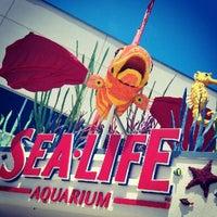 Photo taken at SEA LIFE Aquarium by Nicole K. on 6/23/2012