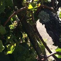 Photo taken at Madonna Estate Winery by mikk d. on 9/25/2016