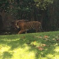 Photo taken at Maharajah Jungle Trek by Sabrina on 9/19/2016