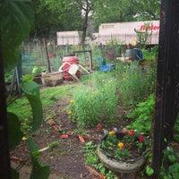 Photo taken at Hattie Carthan Community Garden by Summer B. on 6/4/2013
