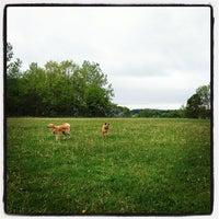 Photo taken at Burlington Waterfront Dog Park by Alex C. on 5/21/2013