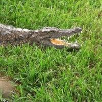 Photo taken at Alligator Adventure by Mindy J. on 7/9/2013