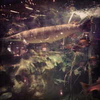 Photo taken at Bass Pro Shops by Kasie S. on 11/10/2012
