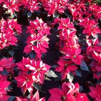 Foto tomada en Mercado de Plantas y Flores  Madreselva por Paola M. el 12/23/2012