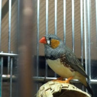 Photo taken at PetSmart by Maurice W. on 2/9/2013