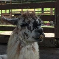 Photo taken at Zoologico Joya Grande by Edwin R. on 7/7/2015