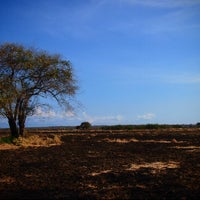 Photo taken at Taman Nasional Baluran (Baluran National Park) by Iphey r. on 10/27/2012