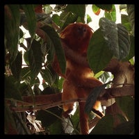 Photo taken at The Rainforest by Stephen B. on 4/7/2013