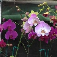 Foto tomada en Mercado de Plantas y Flores  Madreselva por Erika A. el 3/29/2013