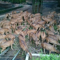 Photo taken at Trivandrum Zoo by Itoshi on 9/20/2015