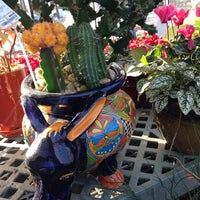 Photo taken at Calloway's Nursery by Lauren J. on 11/18/2014