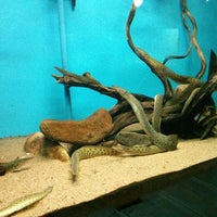 Photo taken at Government Aquarium, Cubbon Park by Krishna A. on 3/24/2013