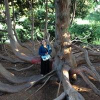Photo taken at Christchurch Botanic Gardens by Ki M. on 12/11/2012