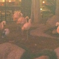 Photo taken at Flamingo North Tour Lobby by Garrard G. on 11/12/2012