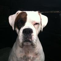Photo taken at Animal Eye Specialists by Tiffany W. on 11/5/2012