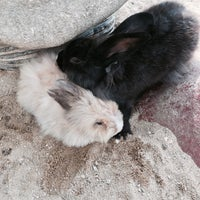 Photo taken at Rabbit Park by Liyana N. on 5/7/2016