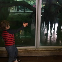 Photo taken at Great Ape House at the National Zoo by Kurtis S. on 11/19/2016