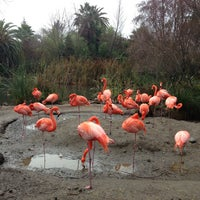 Photo taken at Sacramento Zoo by Lauren C. on 12/29/2012