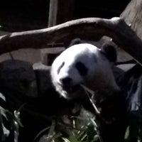 Photo taken at Giant Panda Research Station by Joseph W. on 12/20/2015