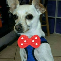 Photo taken at The Purple Pooch Bakery Boutique Groomer by Lenora S. on 12/19/2015