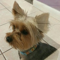 Photo taken at The Purple Pooch Bakery Boutique Groomer by Lenora S. on 10/10/2015