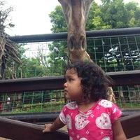 Photo taken at Maharani Zoo & Goa Lamongan by Ismul M. on 1/1/2014