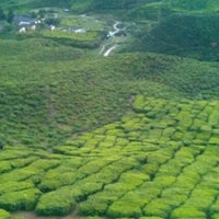 Photo taken at Cameron Bharat Tea Valley by Mohd Azmizam A. on 11/25/2012