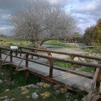 Photo taken at Truva (Troia) Milli Parkı by David L. on 12/27/2012