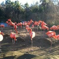 Photo taken at Sacramento Zoo by Chris K. on 1/19/2013