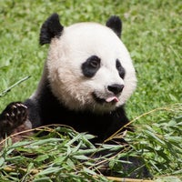 Photo taken at Smithsonian National Zoological Park by nom a. on 8/21/2014